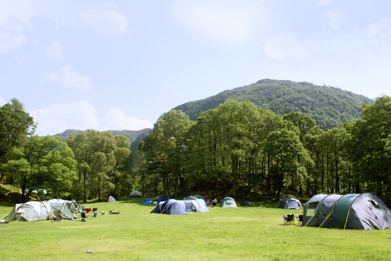 Camping Campsites The Woodland Field The Open Field